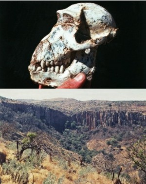 Top:Australopithicus fossils from the caves. Bottom: Makapansgat cultural valley